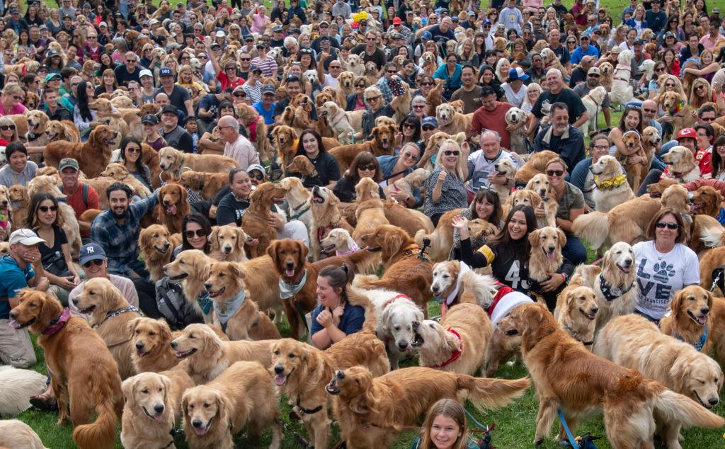 Dog Population U