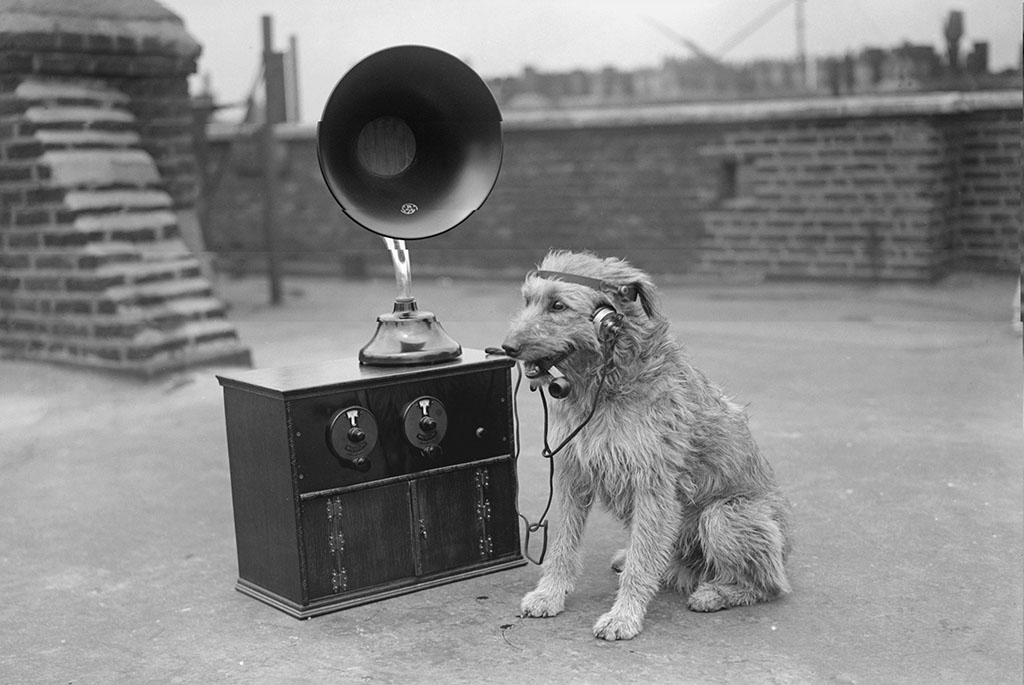 Dogs Hearing
