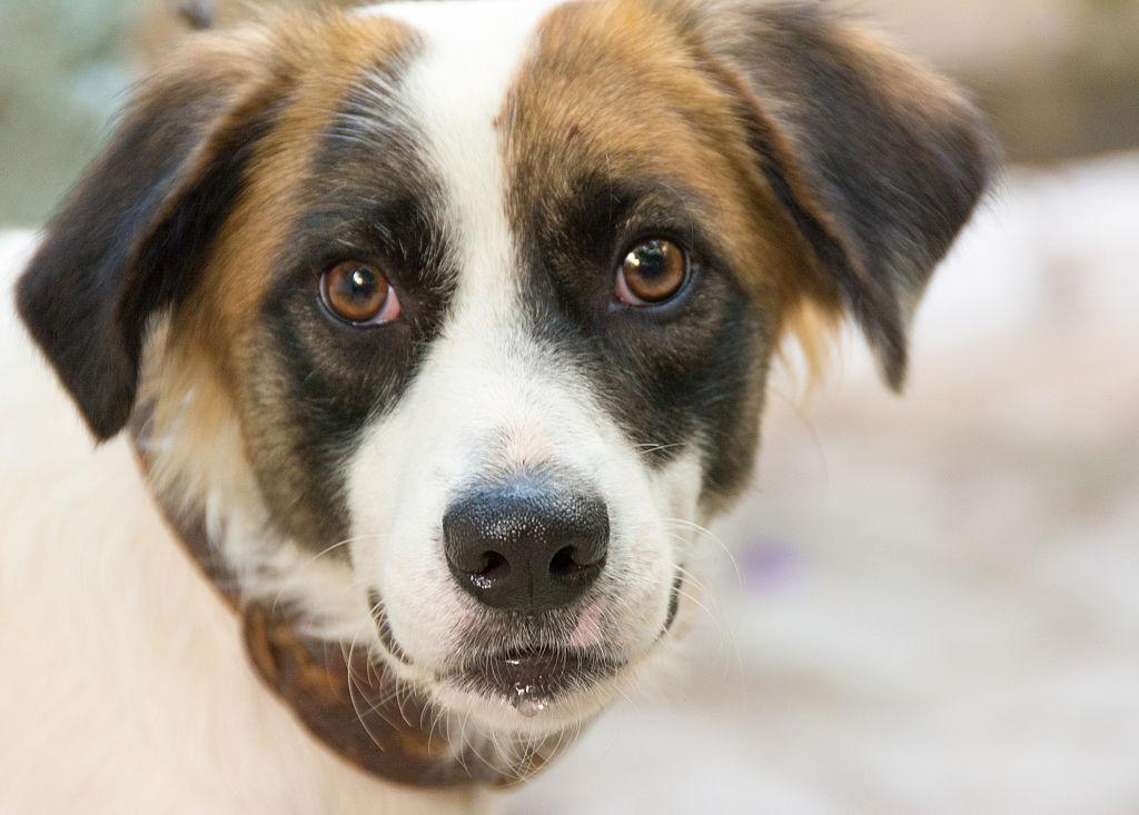 Close up portrait of a cute mutt dog pet
