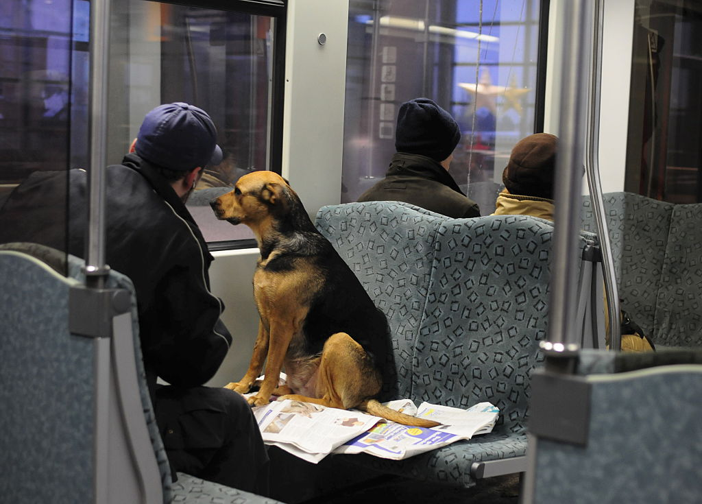 man and dog sitting in the subway