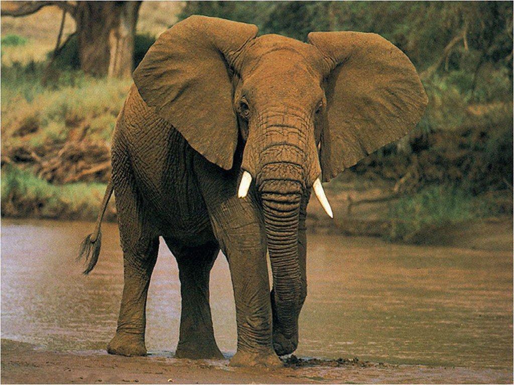 elephant-46242.jpg