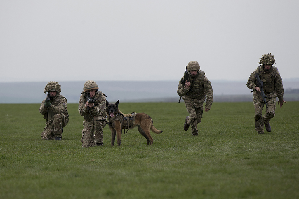 military working dog Cheyenne put on a display as the Army showcases