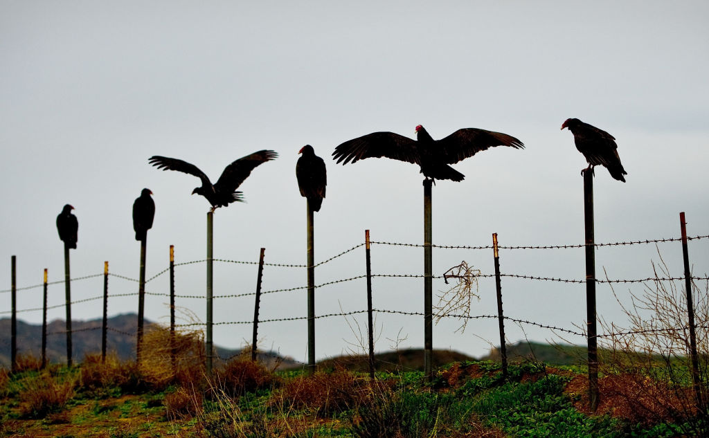 vultures can helps law enforcement officers