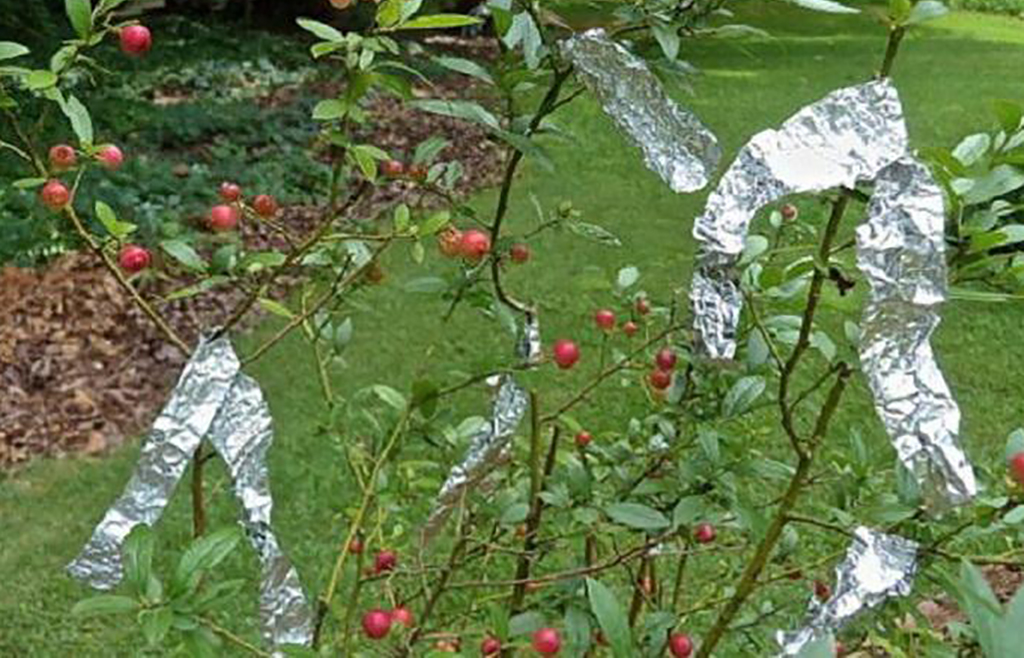 Strips of aluminum foil on fruit tree