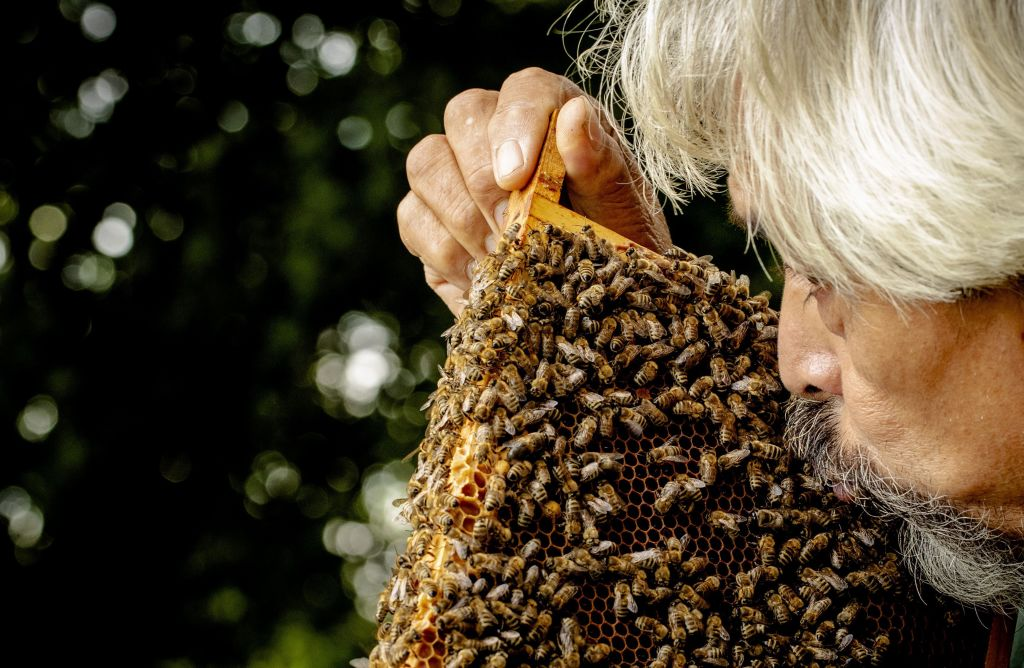 A man plants a kiss on a hive covered in bees.