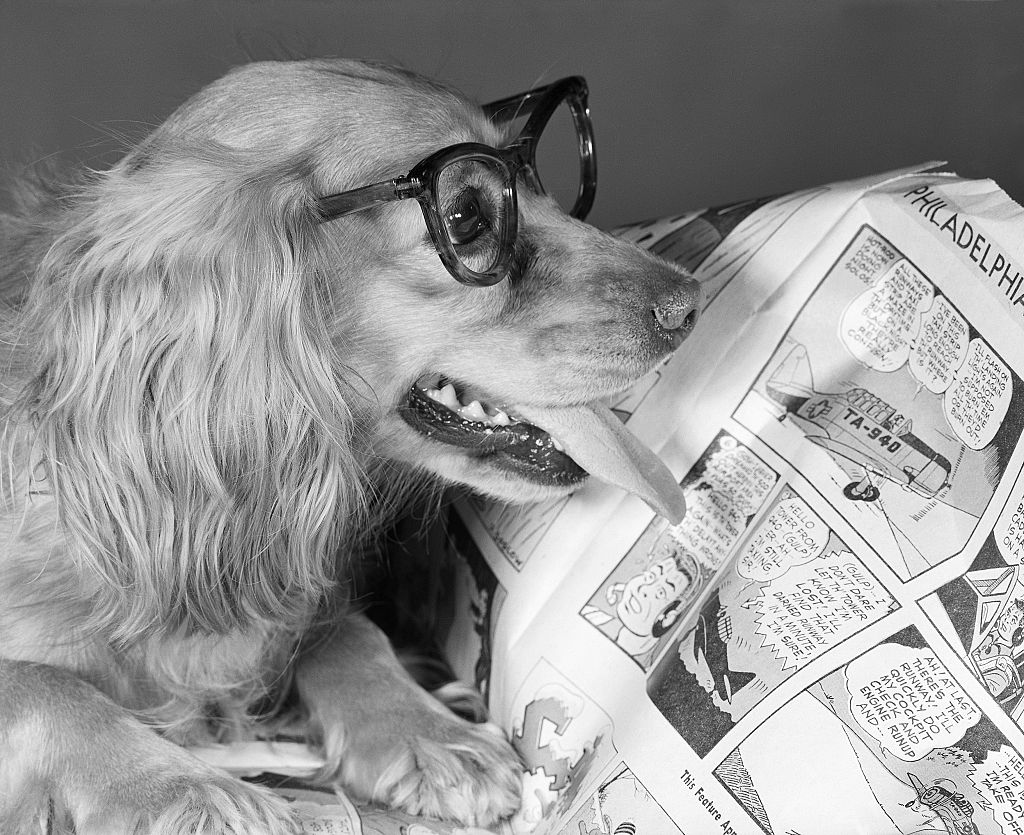 A dog in glasses appears to be reading newspaper comics.