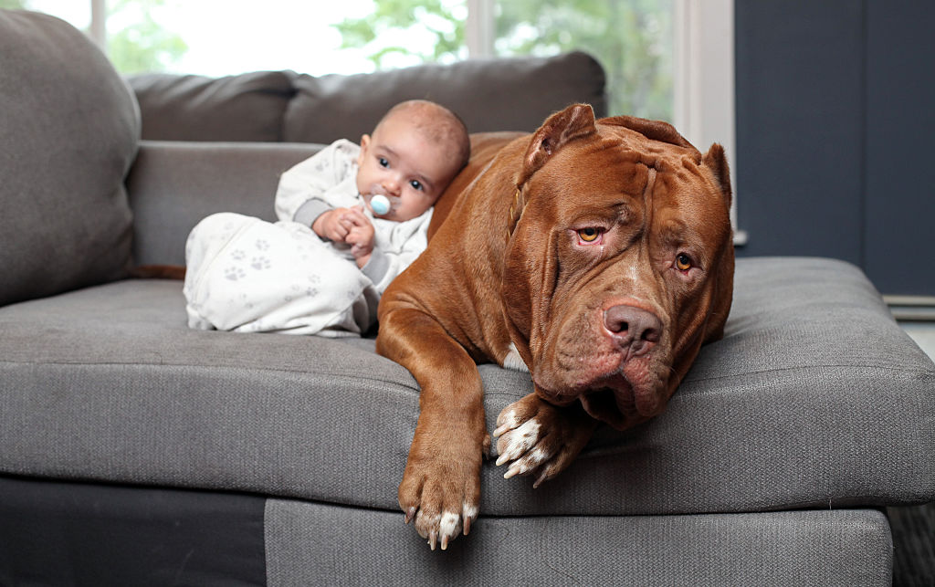A small baby leans against a pitbull lounging on the couch.