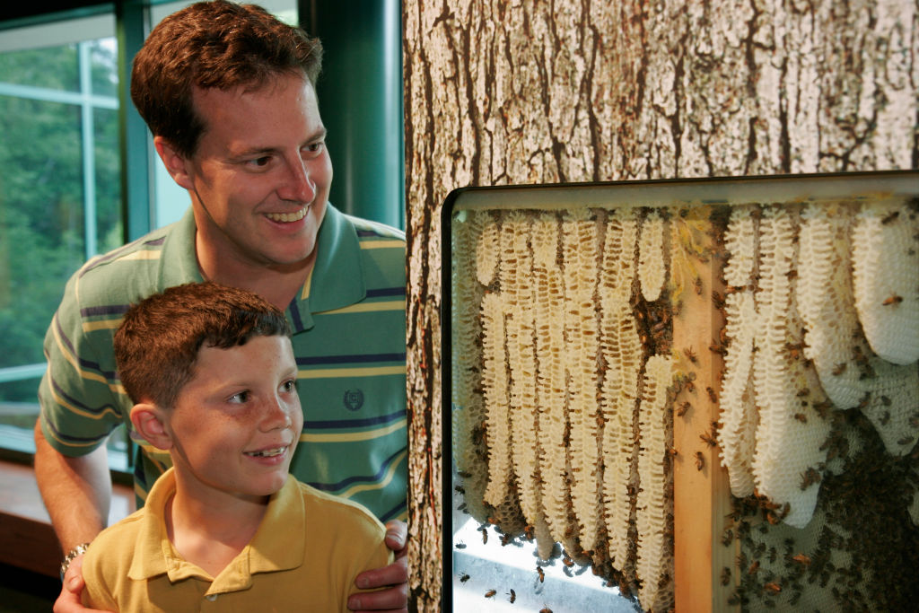 A father and son gaze at a beehive in a museum.