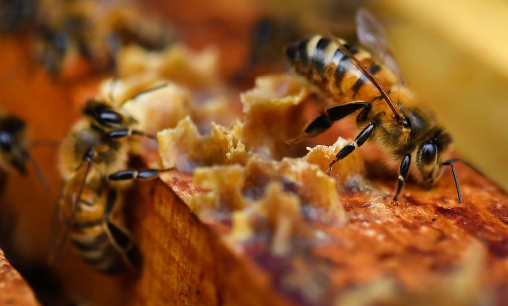 A closeup shows bees crawling near honey.