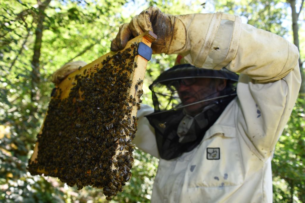 A beekeeper holds up a hive riddled with bees.