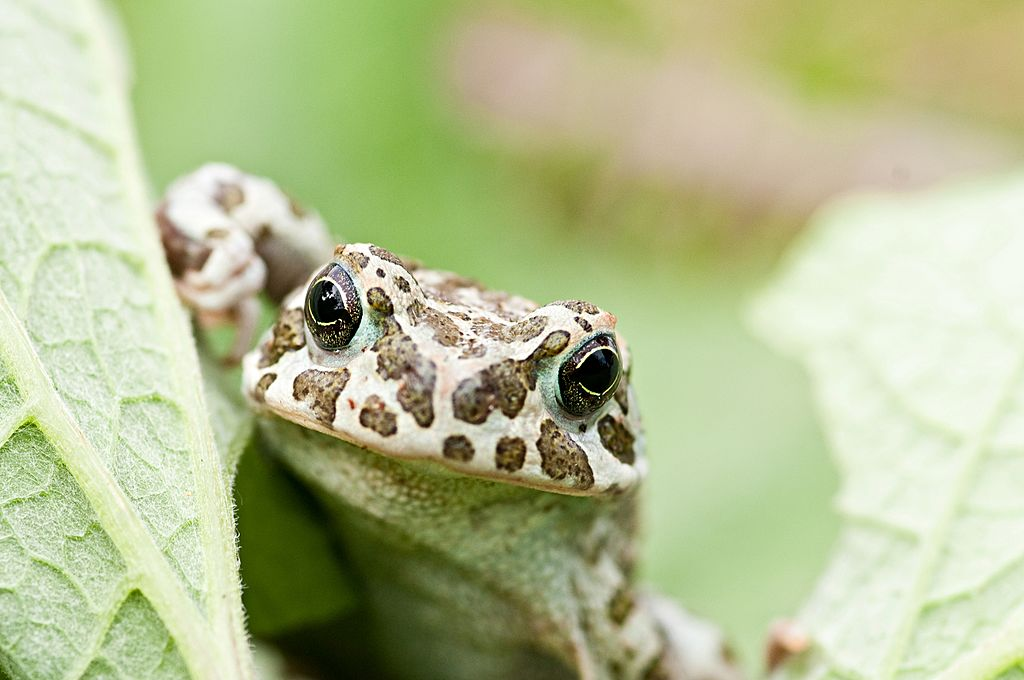There Are 6,000 Species Of Frogs & Toads On The Planet