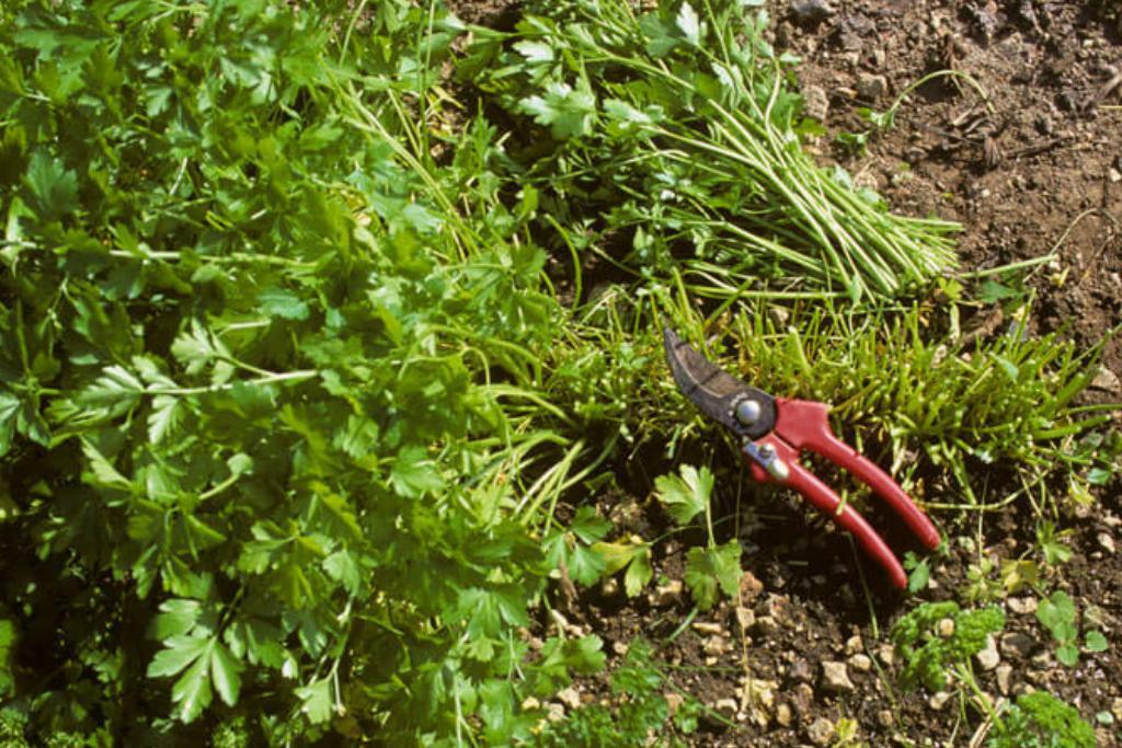 pruning-shears-67997