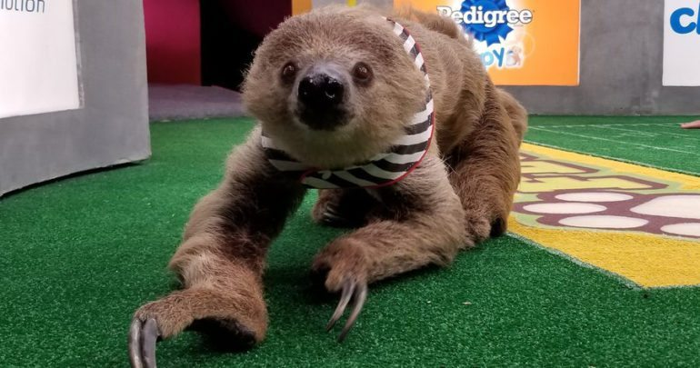 puppy bowl shirley the sloth