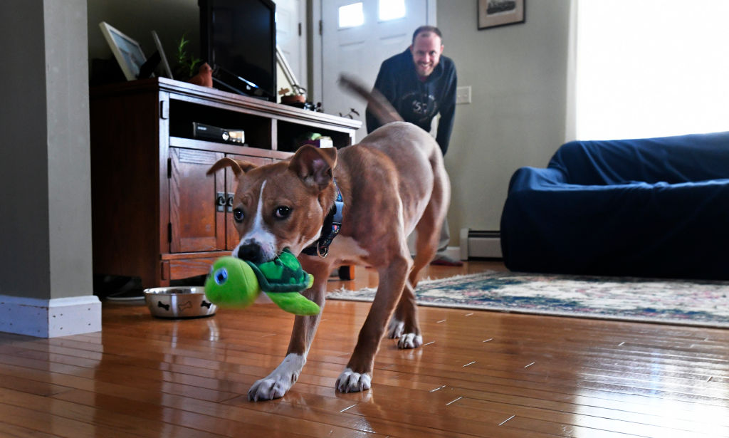 a rescue dog in its forever home from the puppy bowl