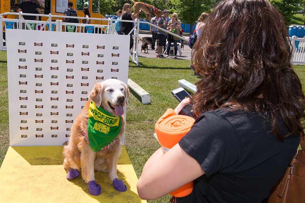 a picture of a puppy taken at woofstock