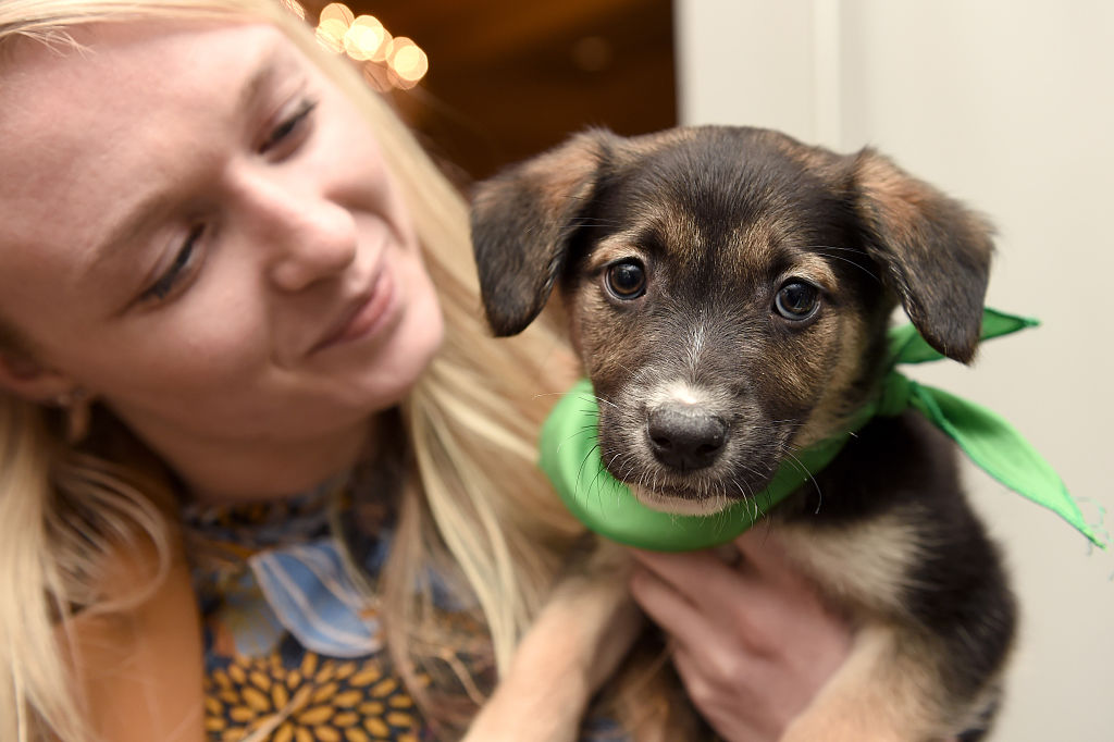 puppy bowl puppy with human