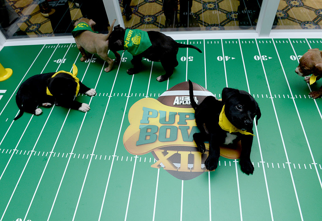 a back lab puppy from the puppy bowl