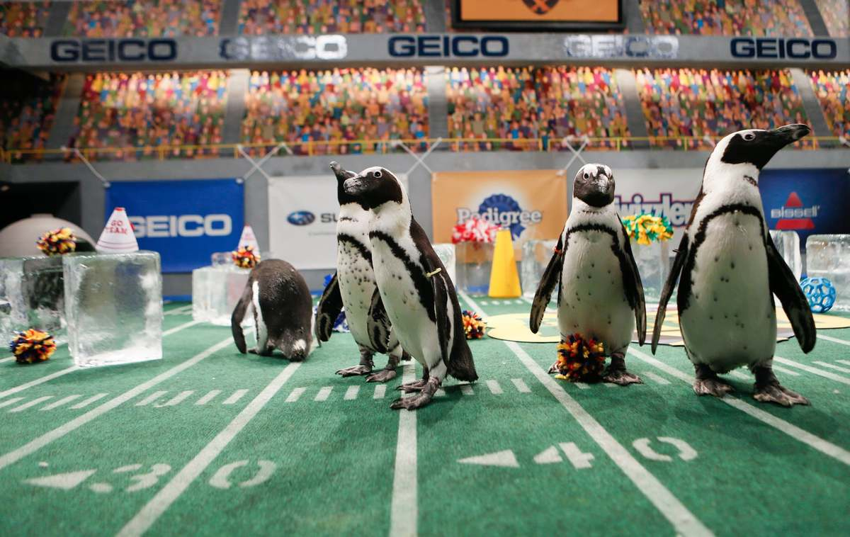 Penguin-Cheerleaders from the puppy bowl