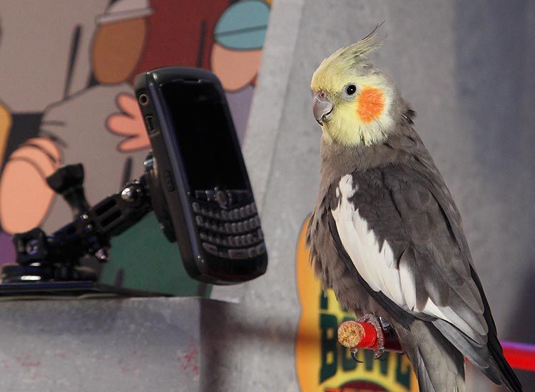 meep the bird from the puppy bowl