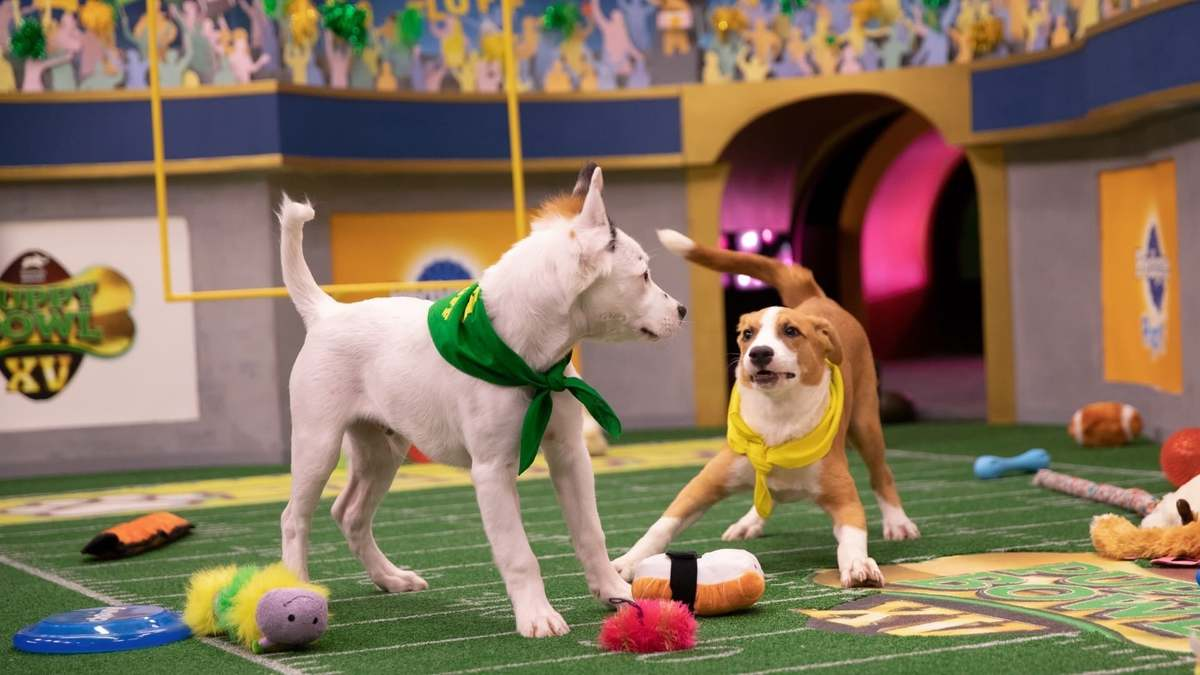 two puppies face off in the puppy bowl