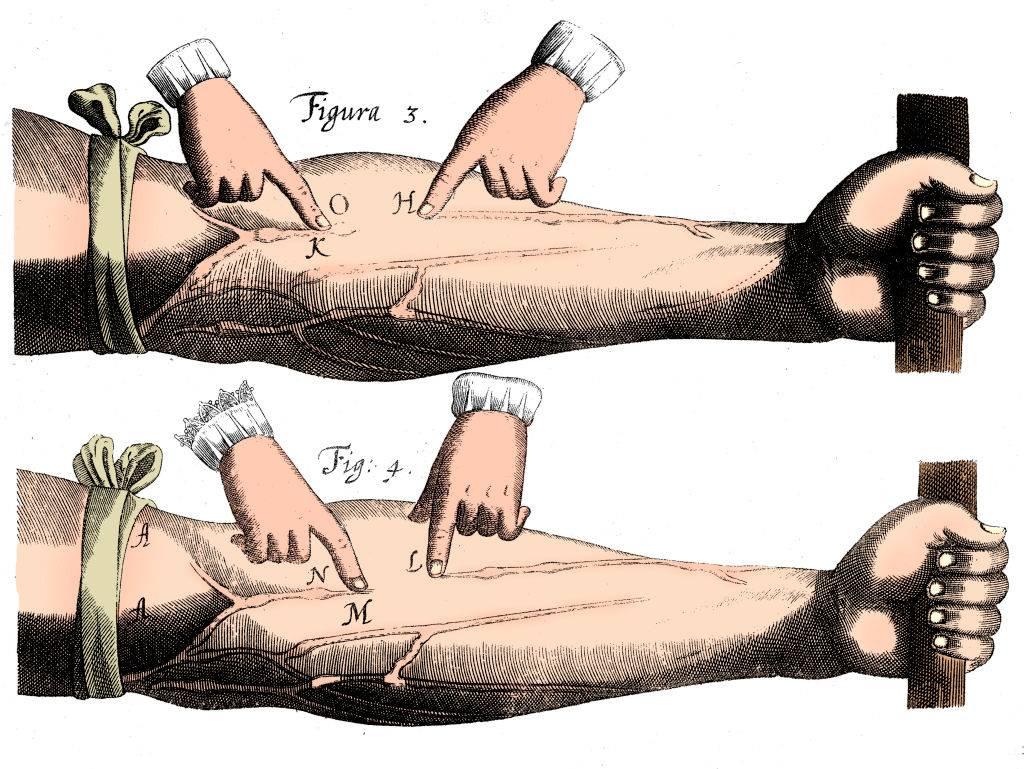 veins in an arm