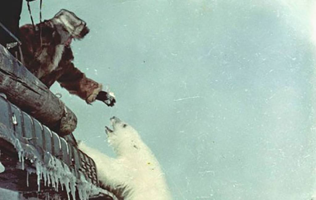 Man feeding polar bear