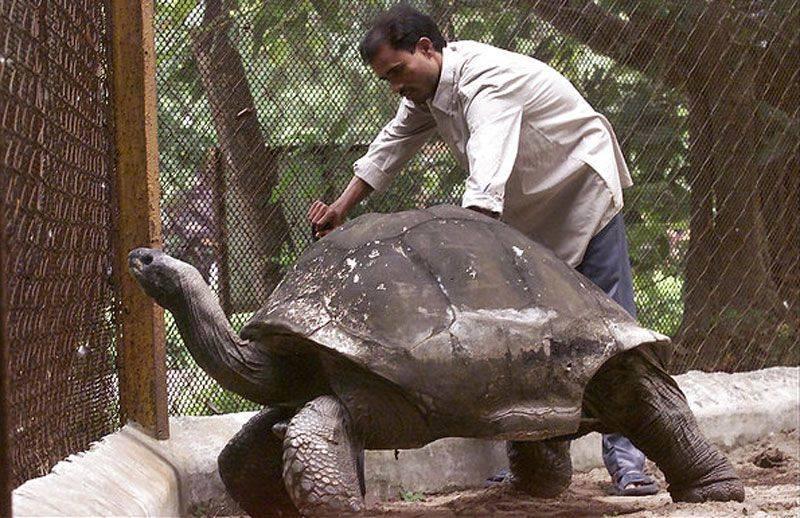 Adwaita tortoise and handler