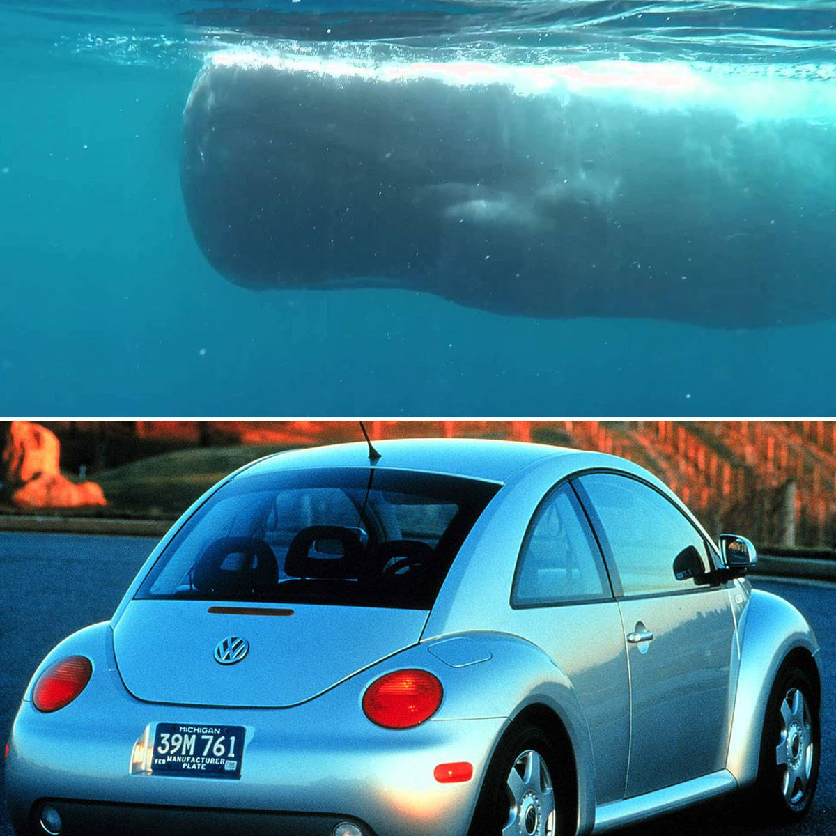 whale-vw