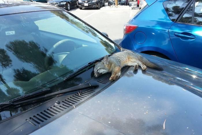 windshield-nap