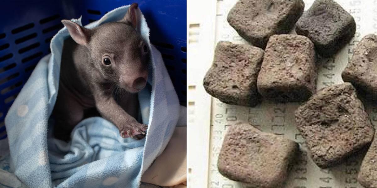 wombat-poop