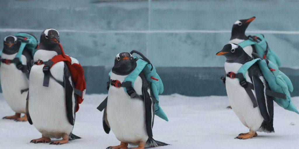 penguins-featured