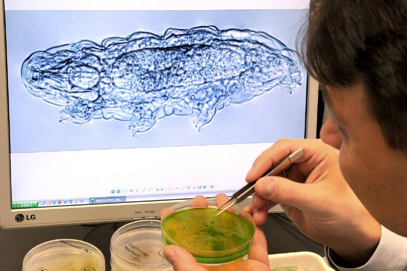 Zoologists and biologist Georg Mayer examines an image of a tardigrade situated in a petri dish.
