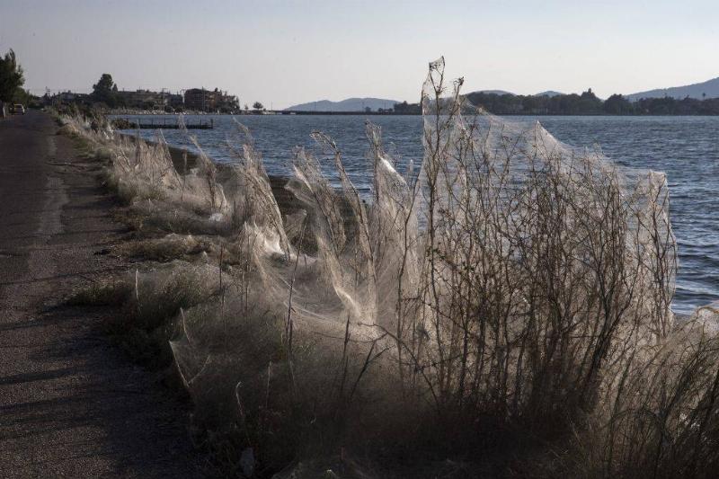 giant web