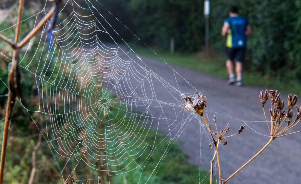large web