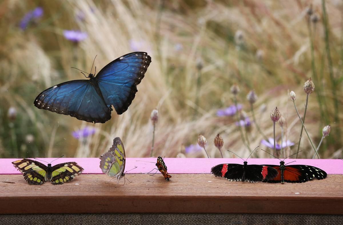 Butterflies hang around a window sill.