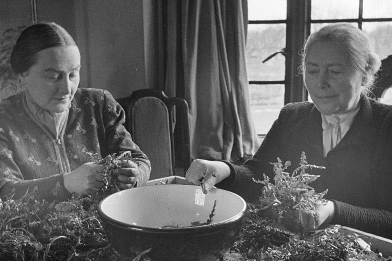 two women preparing a dandelion salad