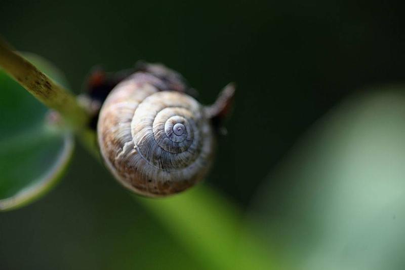 Picture of desert snails