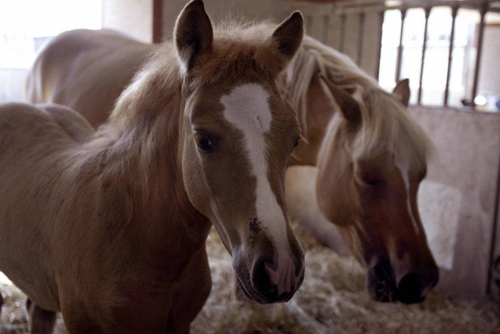 Picture of a horse