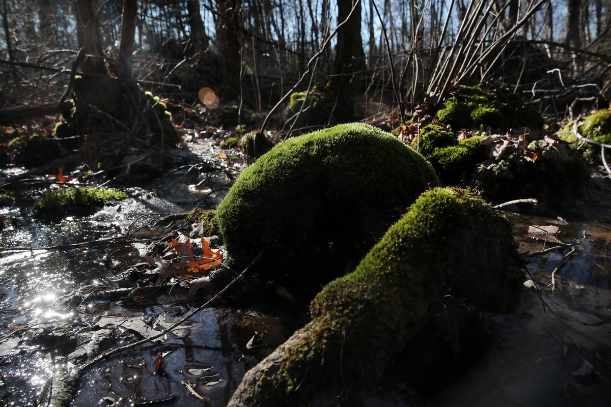 Hockomock Swamp of Critical Concern