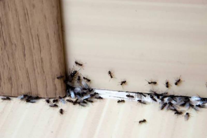 aluminum-foil-ants