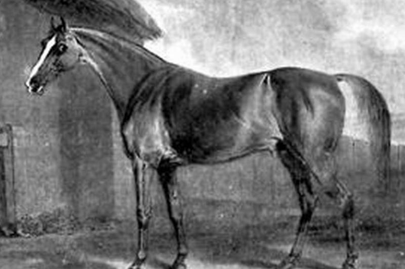 Potoooooooo, the 18th century racehorse, is depicted in this drawing.